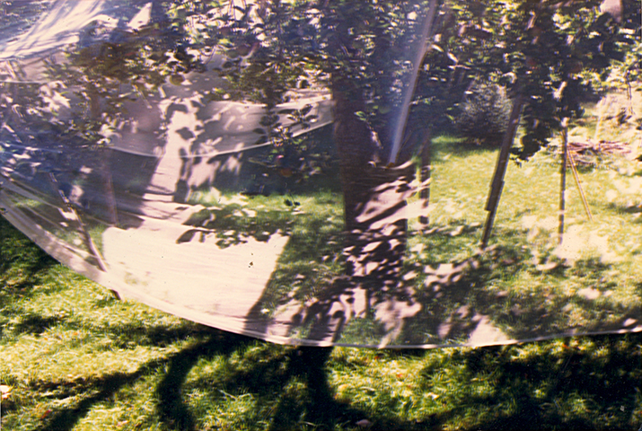 Photograph of The Covered Apple Tree