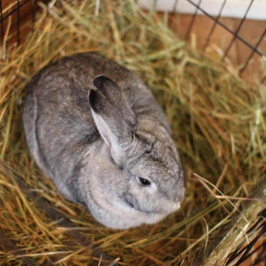 bunny-700x466.jpg