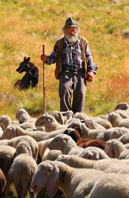 The Italian Alps are full of this image, the shepherd feeding sheep