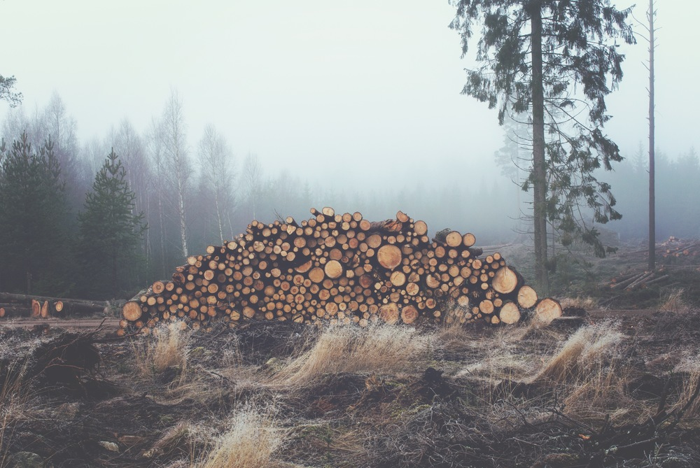 wood-forest-stack-stacked.jpg