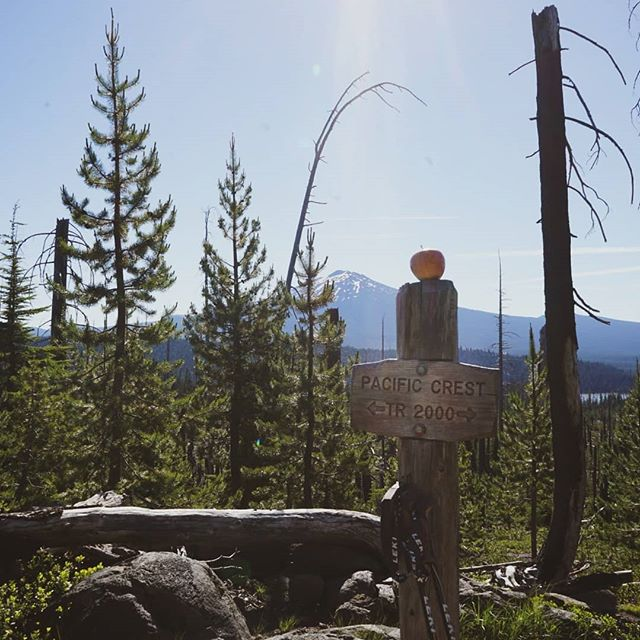 Last month @_samcotton & I jumped back on the #pacificcresttrail for a week to hike from Elk Lake, OR through Mt Jefferson Wilderness, OR - a little chunk of the #pct that was closed due to fires when we hiked last year.  Still got a fire closure in Washington to go until we will have walked every mile of trail (last year we walked all the open miles, and have been itching to get back out and hike the fire closures since). But living in Australia means that the Washington chunk will need to wait for another year..