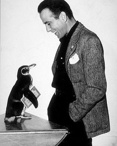 Our little wild friends are pretty stinkin' cute 🐧. . . . #wildfriendshop #humphreybogartandpenguin #actorsandpets #celebritiesandpets