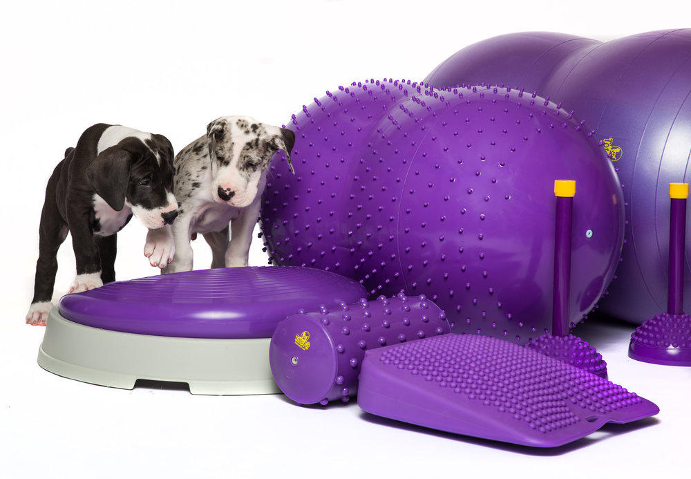 TotoFit - We are incredibly excited to offer the TotoFit K-9 Fitness product range in Australia.The TotoFit range is durable, high quality and Phthalate Free.Now in Stock!