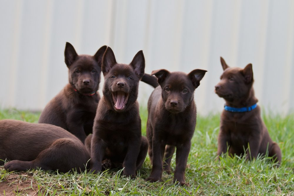 Puppies - 28April11 23.jpg