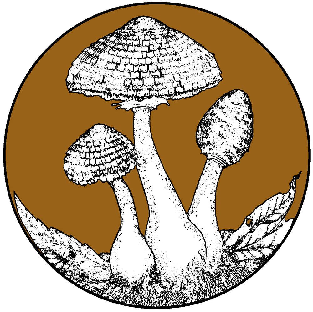 fungus_FINAL copy.jpg