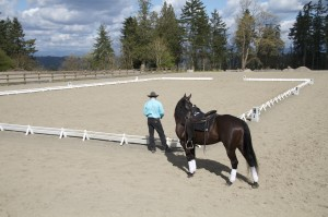 Western Riding Dressage