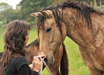 Gaited-Horse-Shopping