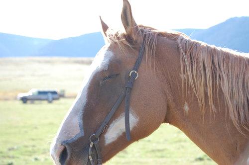 western rider.jpg