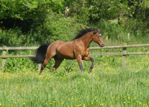 Unique Western Horses - Lucy Adams UKCC Level 2, WES Approved Judge and Instructor.www.uniquewesternhorses.co.ukuniquewesternhorses@gmail.com|07833 357682