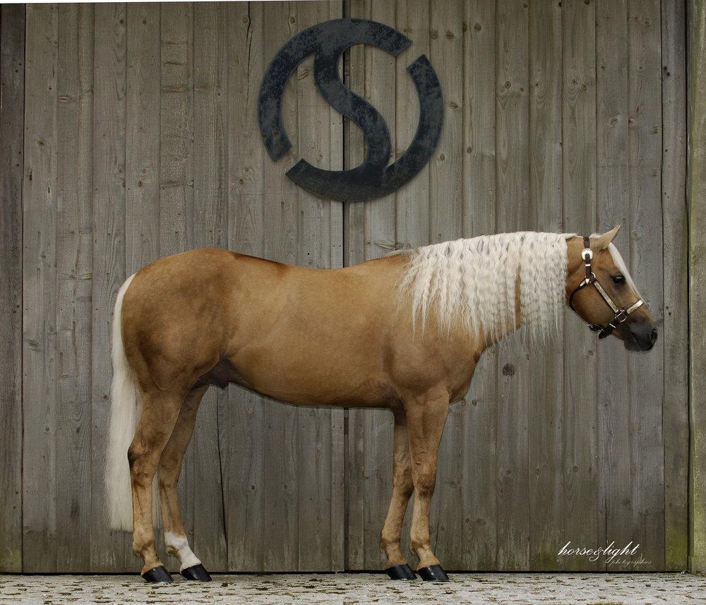 Jac-Sterling Qtr Horses.jpg