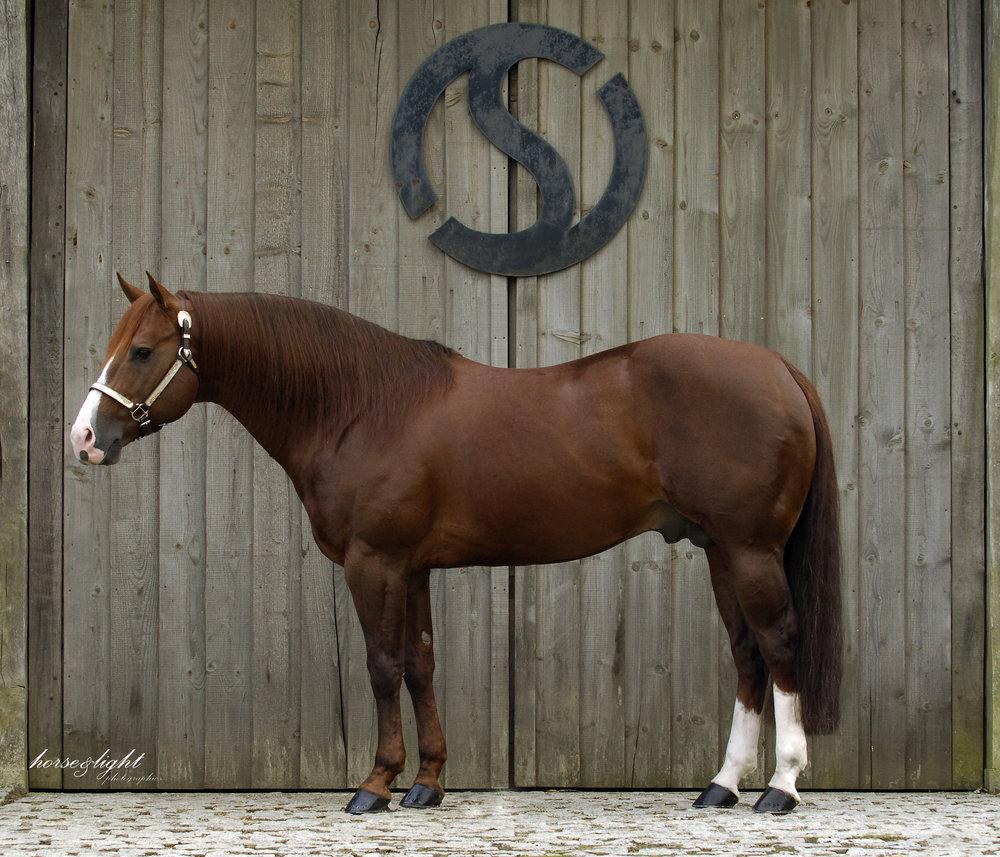 Milo-Sterling Qtr Horses.jpg