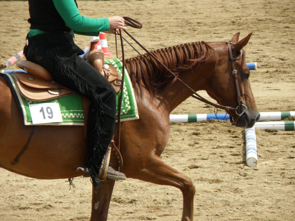 horse_444015_1_.jpg