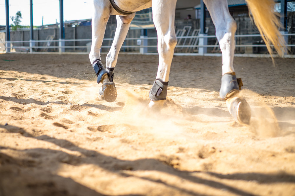 June 2019 - Editorial Features: Joel Conner Horsemanship, Luke Dennnison - Young Horses.Shopping: Keep Cool rider and horse