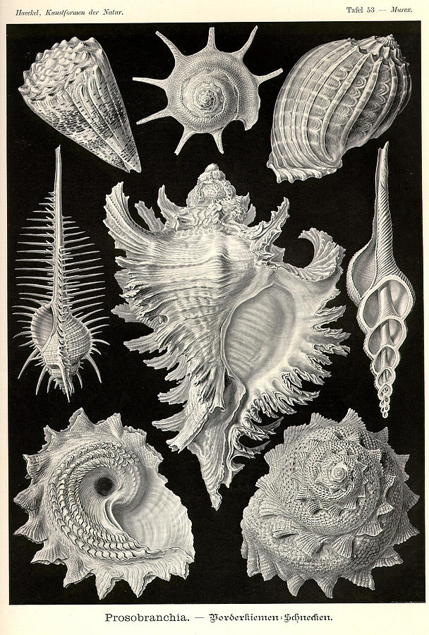 Sea Life by Ernst Haeckel