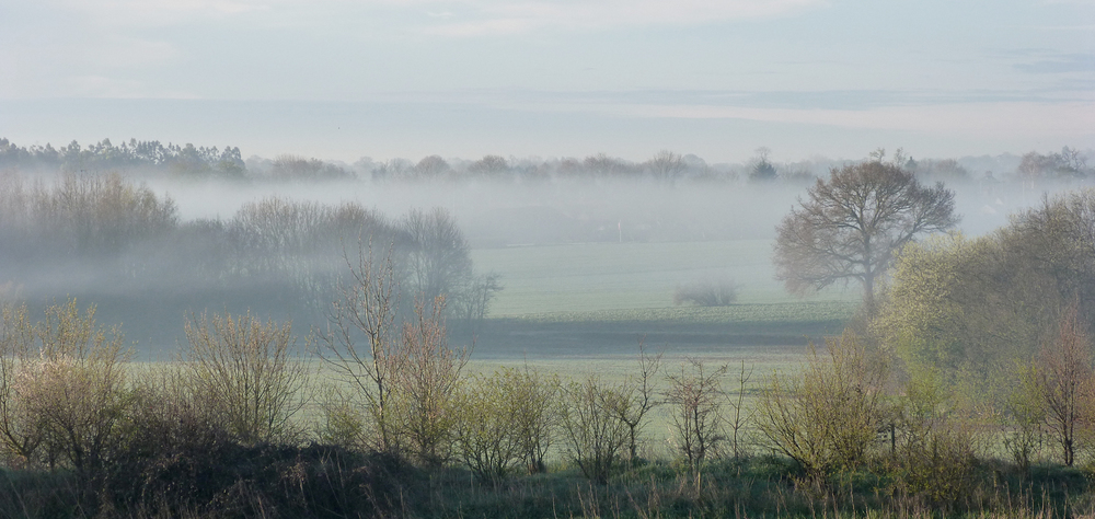 A misty early morning in Essex, as viewed from my room window