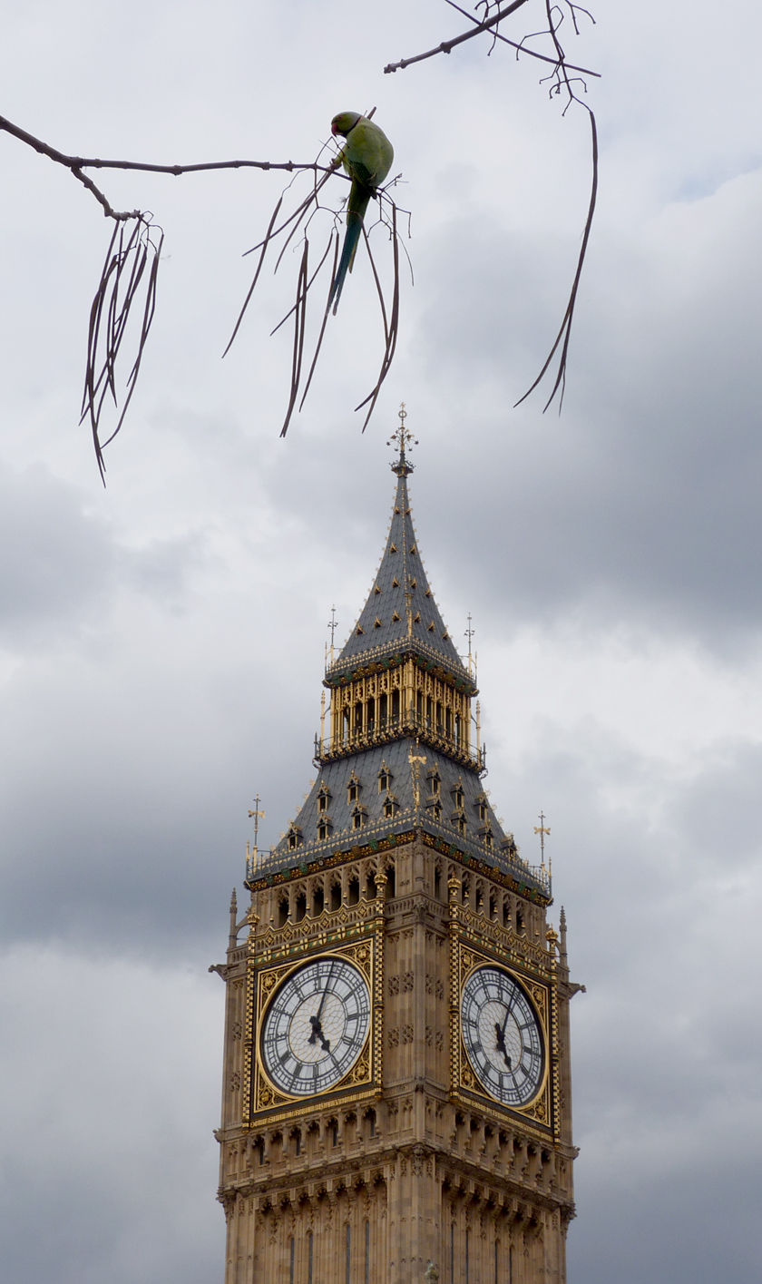 """Parliamentary Parakeets"""