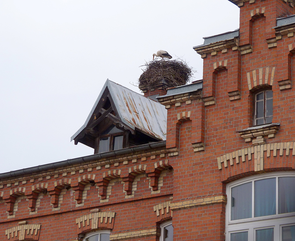 One of the many, many White Storks nests, this one on a building on the edge of Bialowieza town.