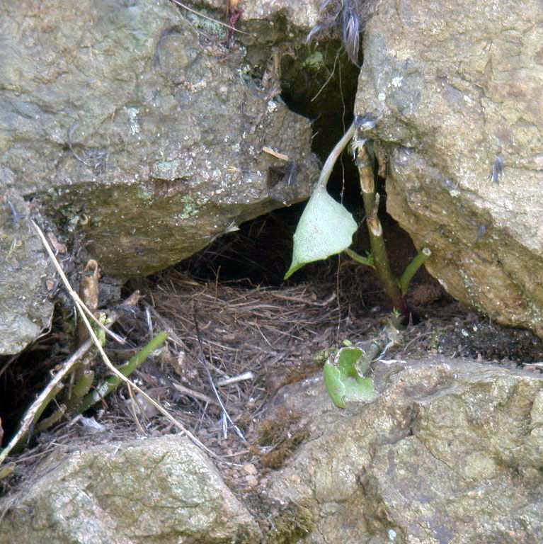 GREY WAGTAIL NEST SITE