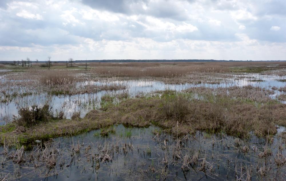 The marshes and reedbeds from the northeastern side of Siemianowka Reservoir
