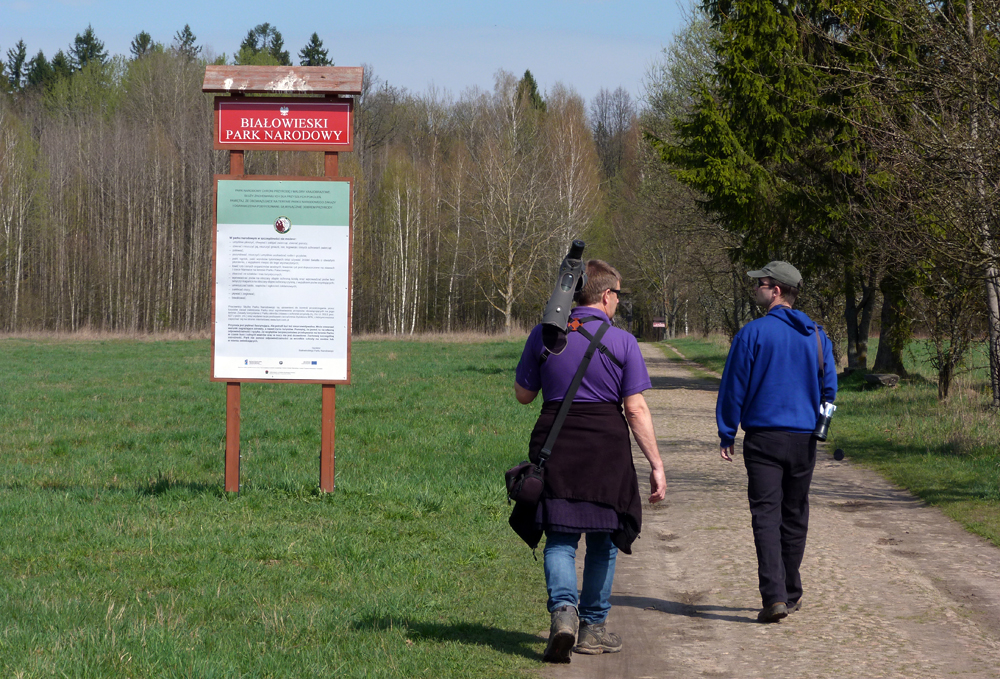The BUBO lads take a look at the most ancient part of Bialowieza Forest