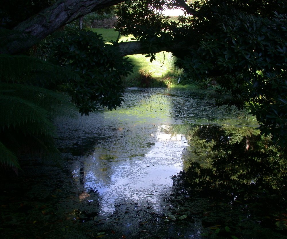 One of the favoured ponds of the Green Heron