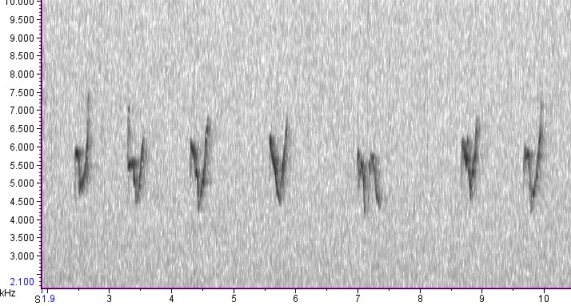 Yellow-browed Warbler    - The spectrogram shows similar V shapes as the Porthgwarra bird but there is some variation (e.g. at 7 seconds there is apair of falling notes rather than down-up).