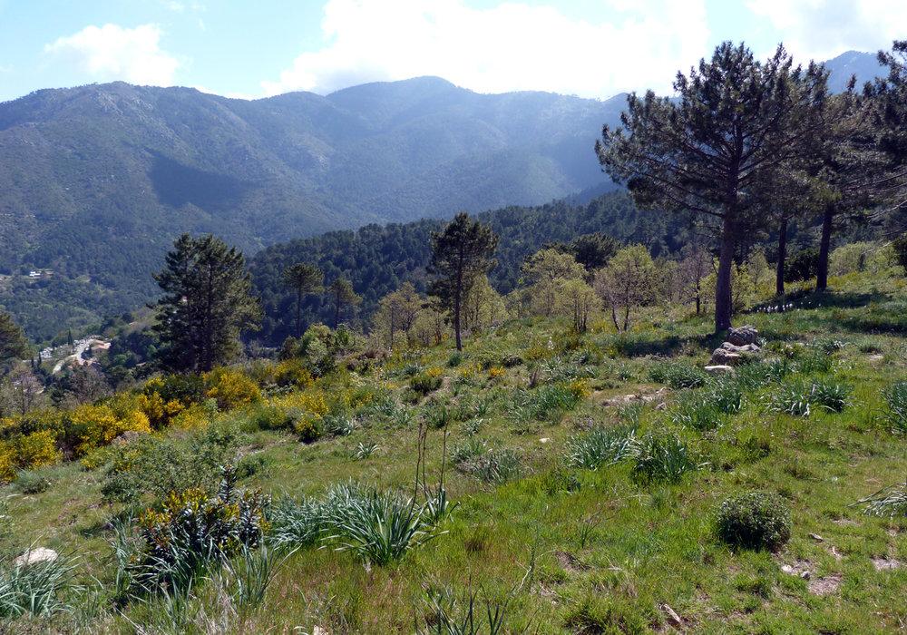 Meadow behind Chalet Restaurant, near Col de Sorba, Vivario