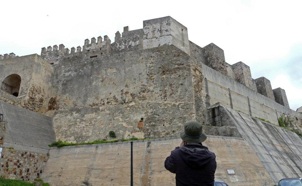Lesser Kestrel nesting colony - Castillo de Tarifa