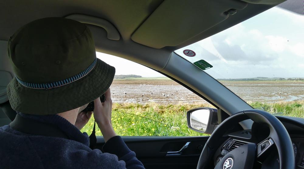Birding at  La Janda