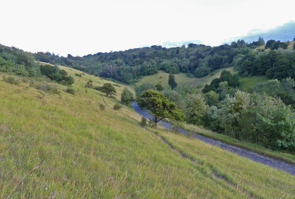 Box Hill, Surrey