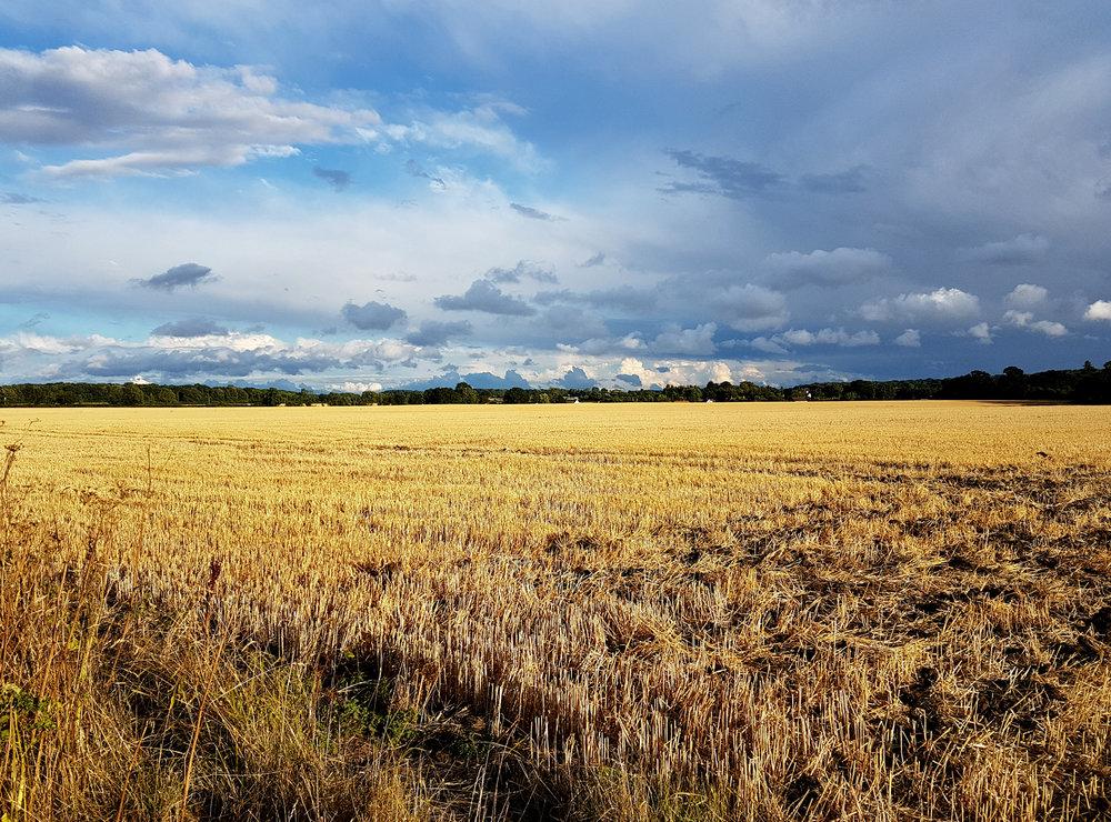 Shotesham fields.jpg