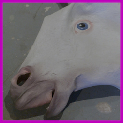 Horse Video EP Cover1.jpg