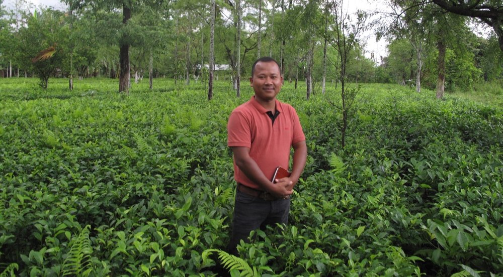 Assam, Kachibari Village - Bold black tea from Tenzing Bodosa's organic farm