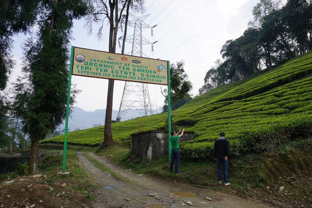 The entrance to Temi Tea Estate. Pay no attention to the American in green with the camera.