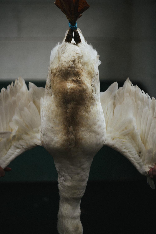 Geese9.jpg