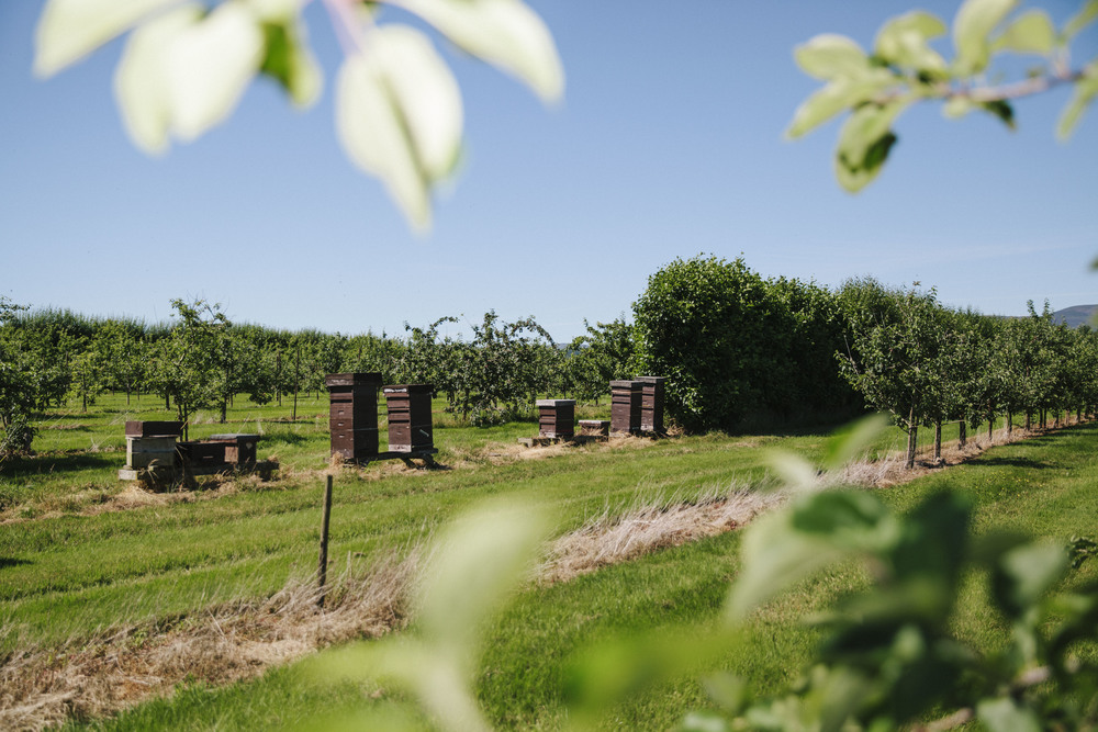 Beekeeping5.jpg