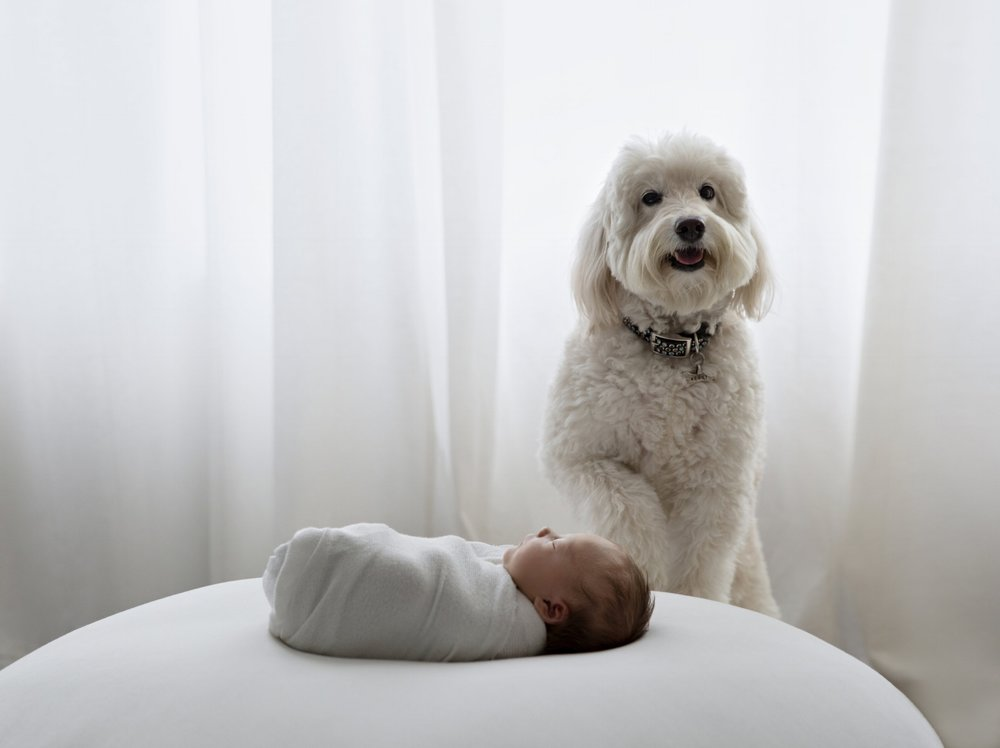 best newborn photographer NYC