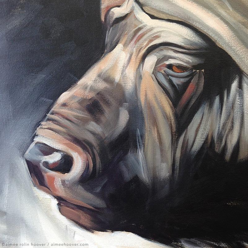 African Buffalo face detail | aimeehoover.com