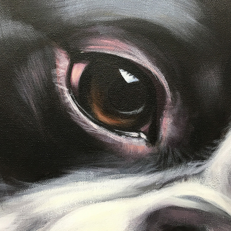 "Super close-up eye detail of ""Spike"" 