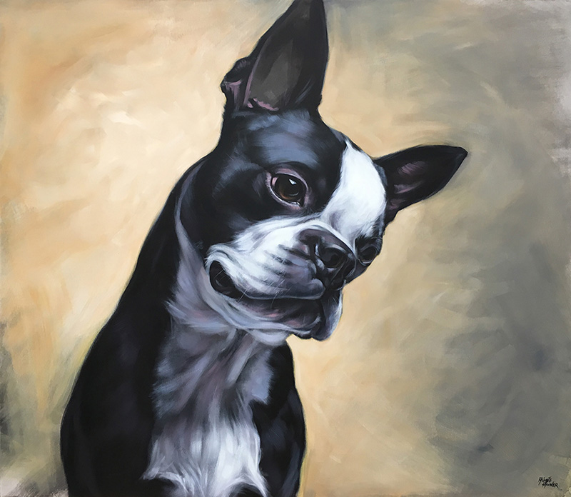 """Spike"" (Boston Terrier) 