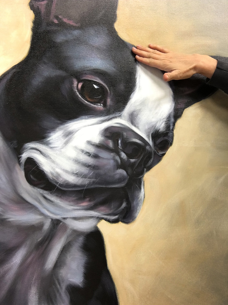 "Detail of ""Spike"" (Boston Terrier) 
