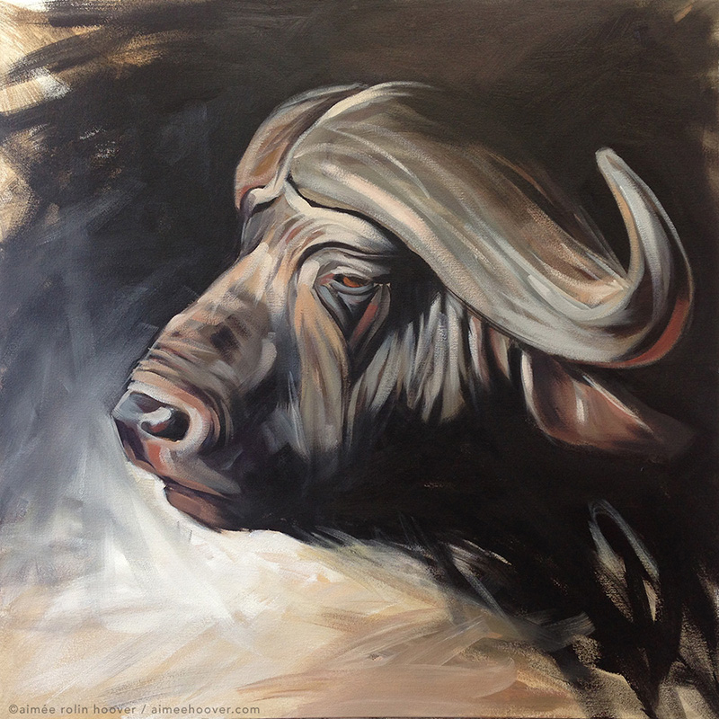 "African Buffalo | 30"" x 30"" 