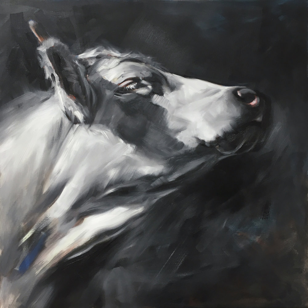 """""""White Cow in Profile"""" 