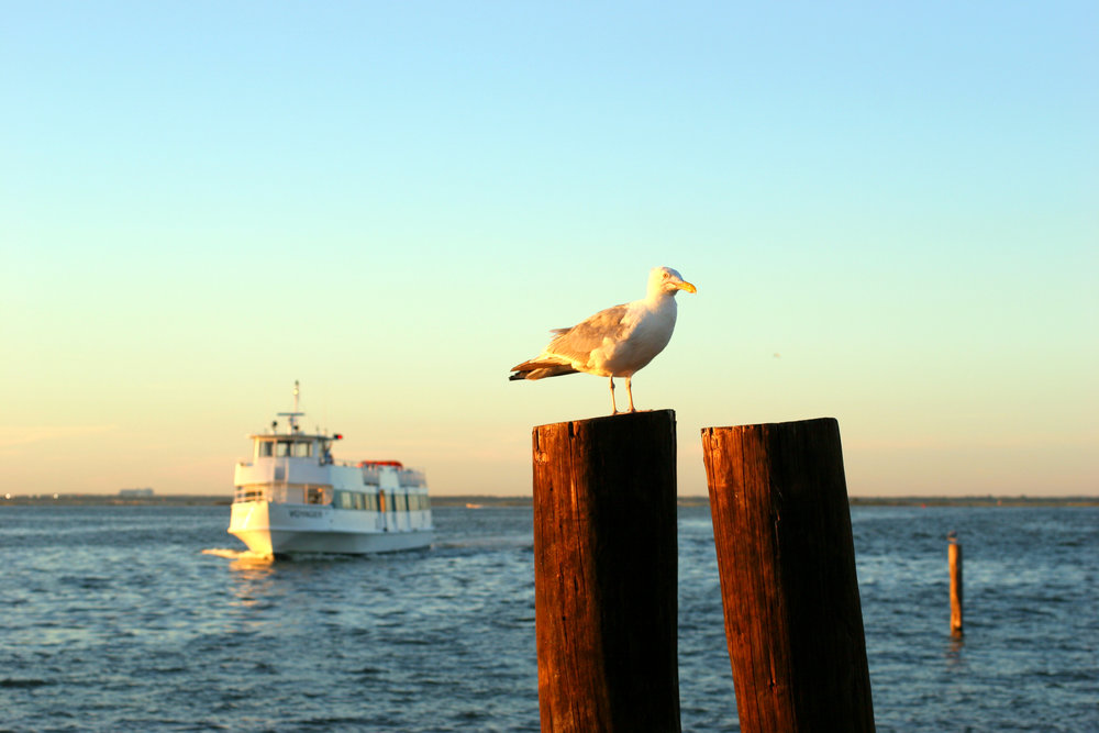No longer a rarity, all-female crews have become the norm at Fire Island Ferries.