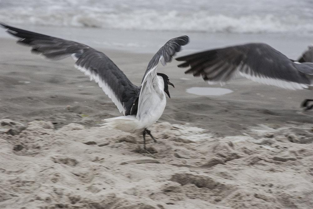 STONEHARBOR_Seagulls_2008_07_30_DSC_0163_WEB.jpg
