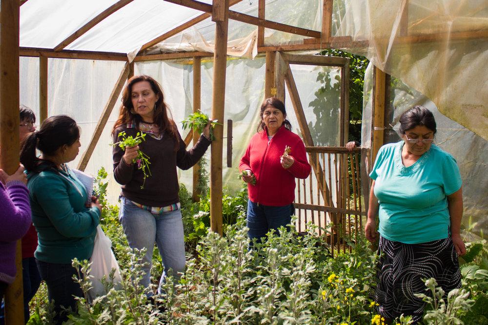 Una botánica de la ciudad dice que Chapod tiene suerte porque tienen gran variedad de plantas. Ella no conoce todas porque las mujeres solo saben los nombres en Mapudungun.
