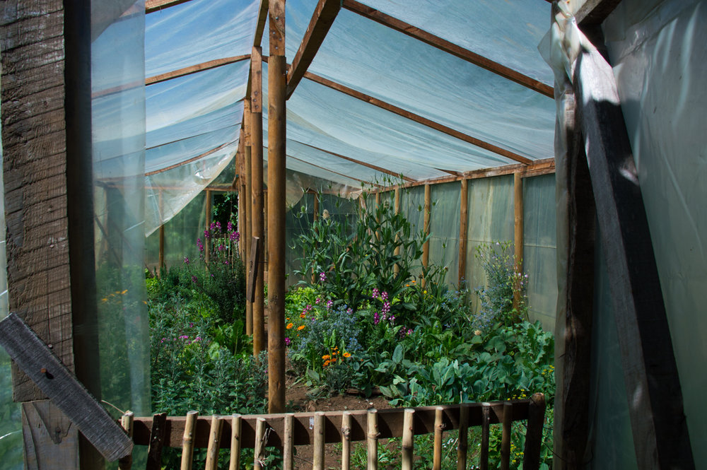 Copy of Norma says that her greenhouse is her favorite place on earth.