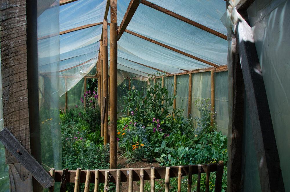 Norma dice que su lugar favorita en el mundo es su invernadero.