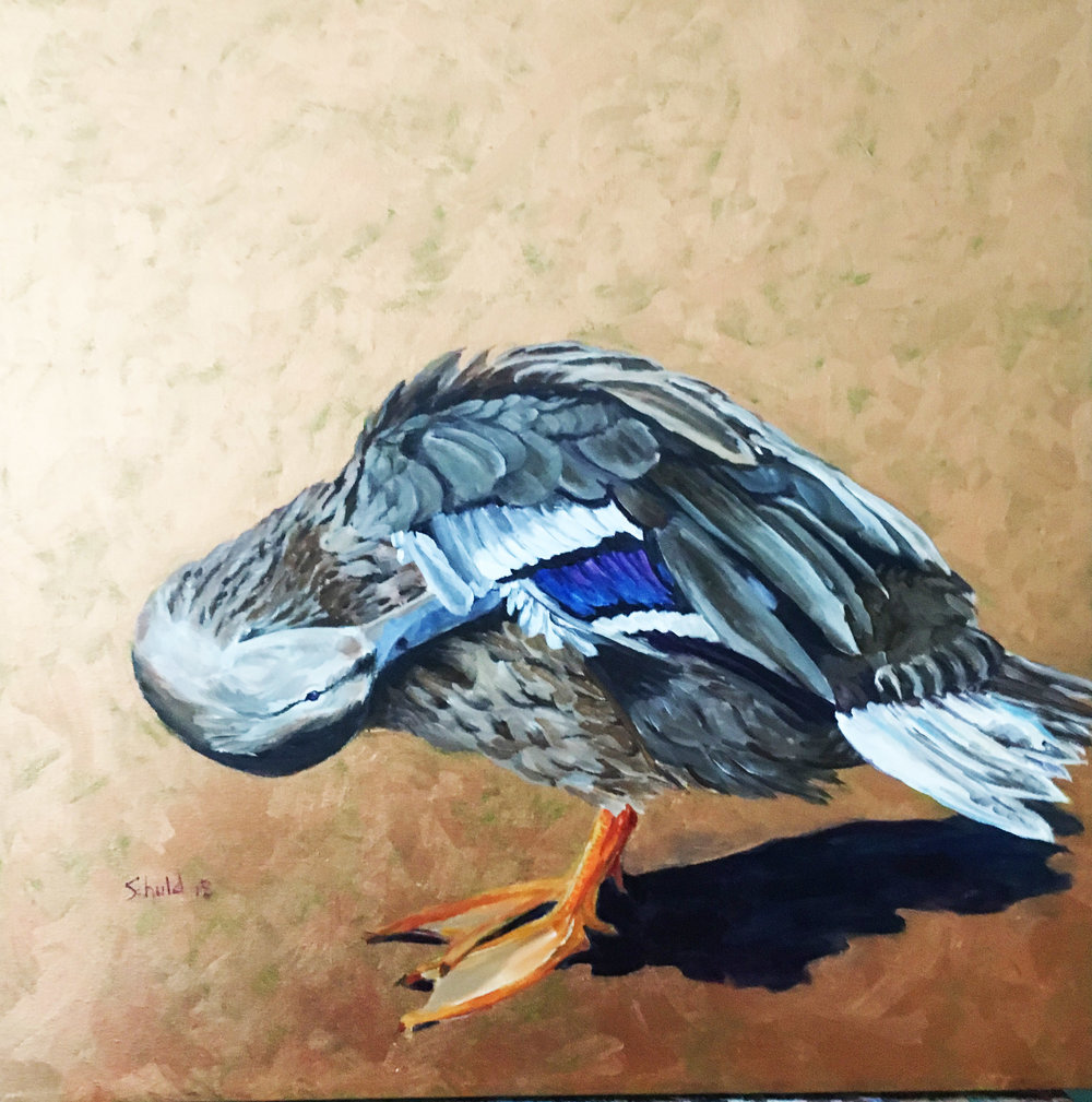 Mallard Duck Hen thumb.jpg