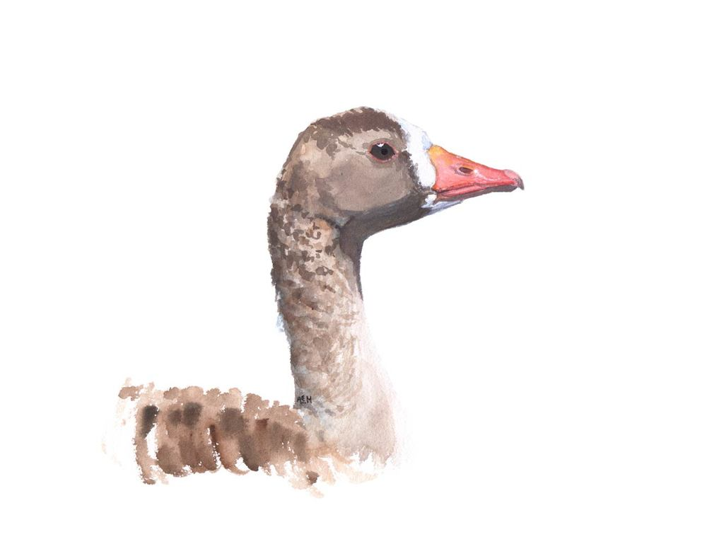 Great White-fronted Goose